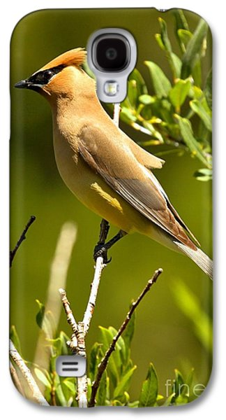 Cedar Waxing Galaxy S4 Case - Perfectly Perched by Adam Jewell