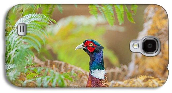 Pheasant Galaxy S4 Case - Pheasant Portrait by Paul Neville