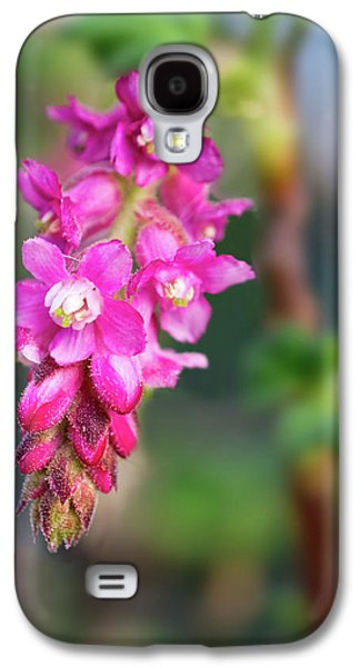Pink Chaparral Currant, Ribes Malvaceum Galaxy S4 Case by Alessandra RC