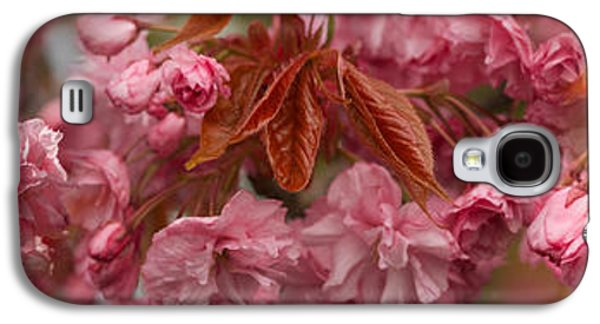 Pink Cherry Blossoms In Spring Galaxy S4 Case by Panoramic Images