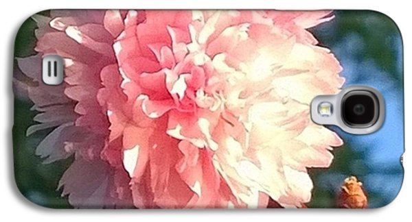 Pink Flower Bloom In Sunset. #flowers Galaxy S4 Case