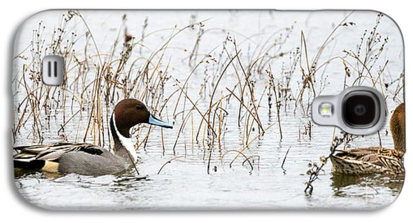 Pintail Pair Galaxy S4 Case by Mike Dawson