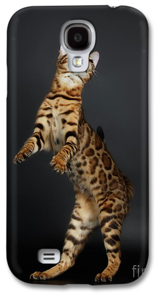 Playful Female Bengal Cat Stands On Rear Legs Galaxy S4 Case by Sergey Taran