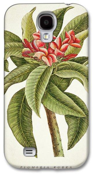 Plumeria Rubra Botanical Print Galaxy S4 Case