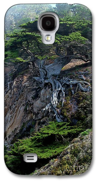 Point Lobos Veteran Cypress Tree Galaxy S4 Case by Charlene Mitchell