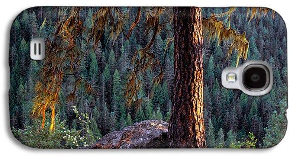 Ponderosa Pine Galaxy S4 Case