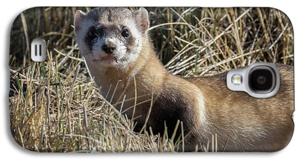 Portrait Of A Black-footed Ferret Galaxy S4 Case by Tony Hake