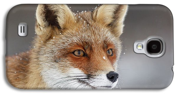 Portrait Of A Red Fox In The Snow Galaxy S4 Case