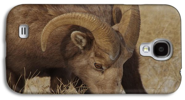 Portrait Of A Young Ram Galaxy S4 Case by Jeff Swan