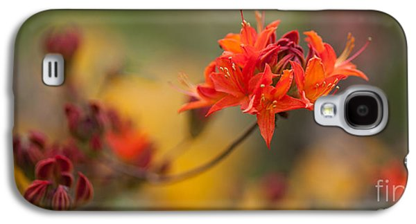 Rhododendron Galaxy S4 Cases - Potential Galaxy S4 Case by Mike Reid
