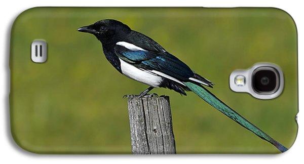 Prairie Perch Galaxy S4 Case by Tony Beck