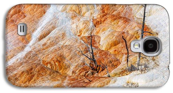 Prehistoric Trees Galaxy S4 Case by Todd Klassy