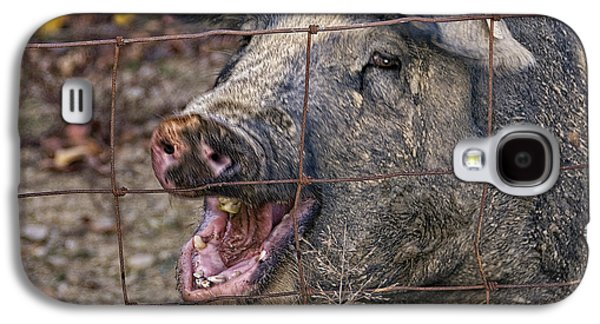 Pretty Pig Galaxy S4 Case by Timothy Flanigan and Debbie Flanigan at Nature Exposure