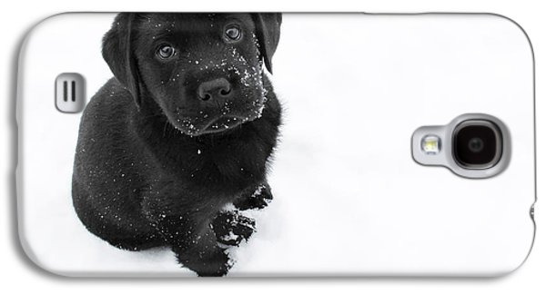 Puppy In The Snow Galaxy S4 Case by Larry Marshall