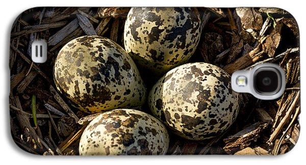 Quartet Of Killdeer Eggs By Jean Noren Galaxy S4 Case by Jean Noren