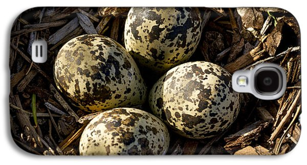 Killdeer Galaxy S4 Case - Quartet Of Killdeer Eggs By Jean Noren by Jean Noren