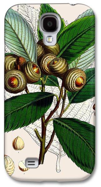 Quercus Lamellosa Galaxy S4 Case