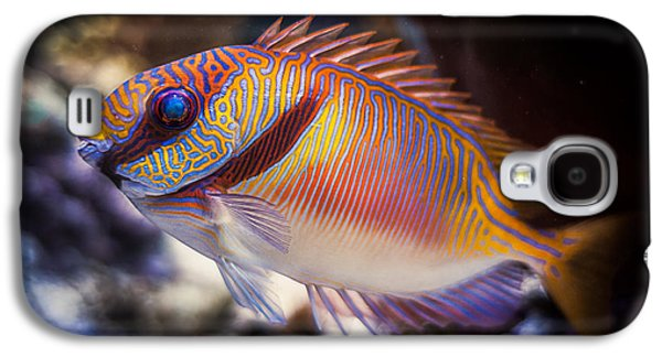 Rabbitfish Galaxy S4 Case