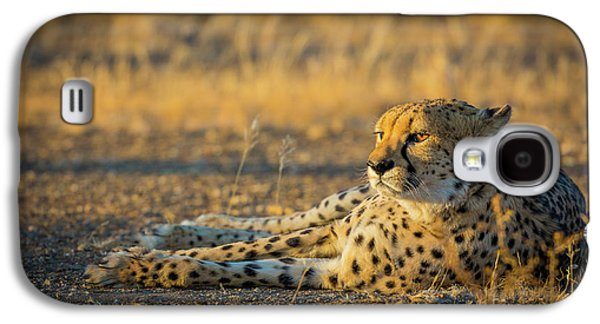 Reclining Cheetah Galaxy S4 Case by Inge Johnsson