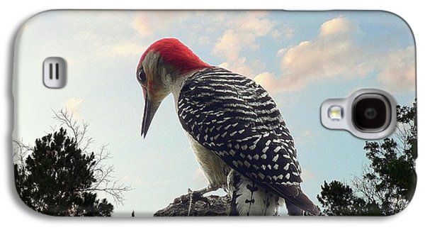 Red-bellied Woodpecker - Tree Top Galaxy S4 Case by Al Powell Photography USA
