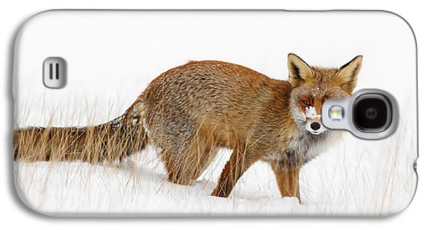 Red Fox In A Snow Covered Scene Galaxy S4 Case