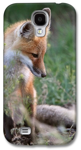 Pup Digital Art Galaxy S4 Cases - Red Fox pup outside its den Galaxy S4 Case by Mark Duffy