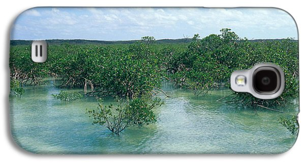 Red Mangrove Forest Galaxy S4 Case by John Kaprielian
