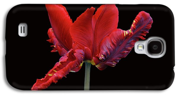 Red Parrot Tulip Galaxy S4 Case