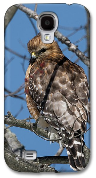 Galaxy S4 Case featuring the photograph Red Shouldered Hawk 2017 by Bill Wakeley