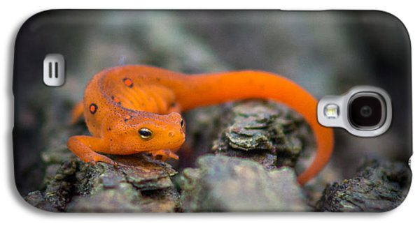 Red Spotted Newt Galaxy S4 Case by Chris Bordeleau