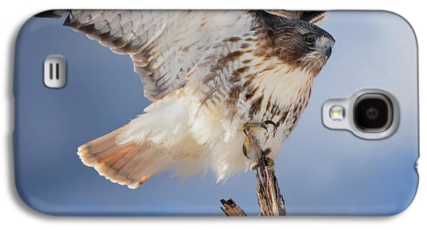Red Tail Hawk Perch Galaxy S4 Case