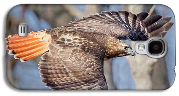 Red Tailed Hawk Flying Galaxy S4 Case