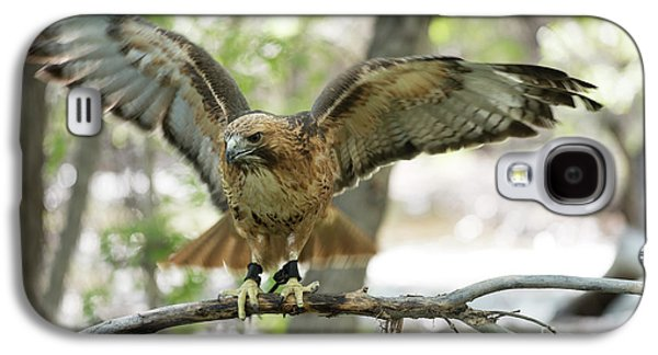 Red-tailed Hawk  Galaxy S4 Case by Juli Scalzi