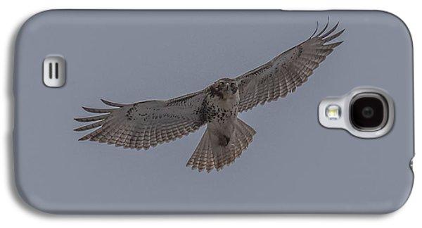 Red Tailed Hawk Soaring Galaxy S4 Case by Paul Freidlund