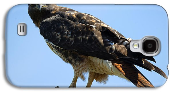 Red-tailed Stare Galaxy S4 Case by Mike Dawson