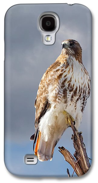 Redtail Portrait Galaxy S4 Case by Bill Wakeley