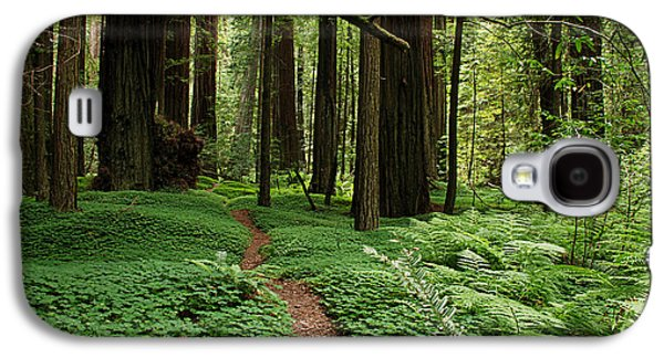 Redwood Forest Path Galaxy S4 Case