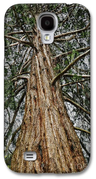 Redwood Reaches For The Sky Galaxy S4 Case