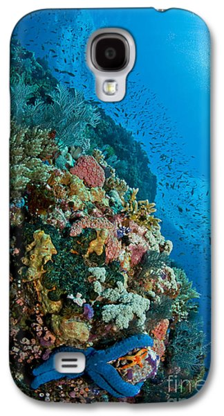 Schools Of Fish Galaxy S4 Cases - Reef Scene With Corals And Fish Galaxy S4 Case by Mathieu Meur