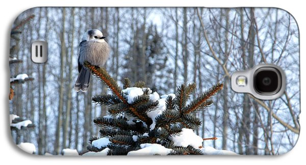 Refined Little Gray Jay In Colorado Galaxy S4 Case by Carol M Highsmith