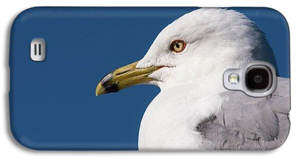 Ring-billed Gull Portrait Galaxy S4 Case