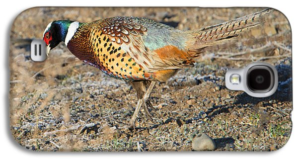 Ring-necked Pheasant Rooster Galaxy S4 Case by Mike Dawson