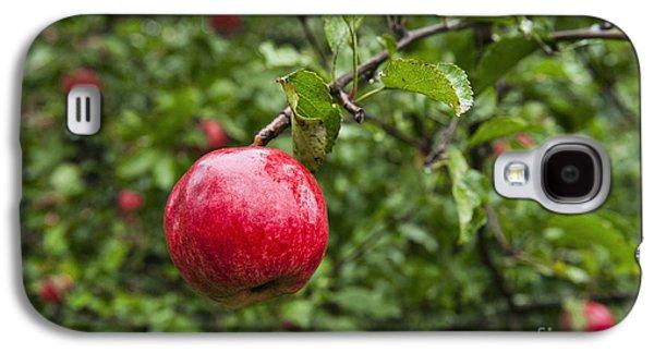 Ripe Apples. Galaxy S4 Case by John Greim