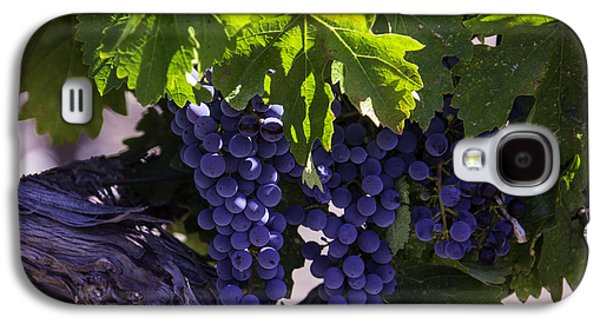 Ripe Grapes Galaxy S4 Case by Garry Gay