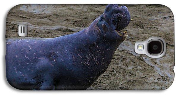 Roaring Bull Elephant Seal Galaxy S4 Case