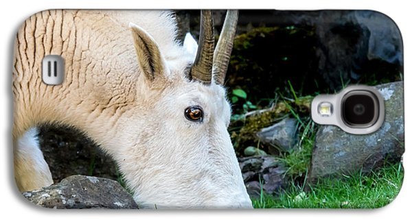 Rocky Mountain Goat Busy Eating Galaxy S4 Case