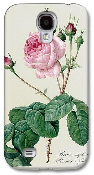 Rosa Centifolia Bullata Galaxy S4 Case by Pierre Joseph Redoute