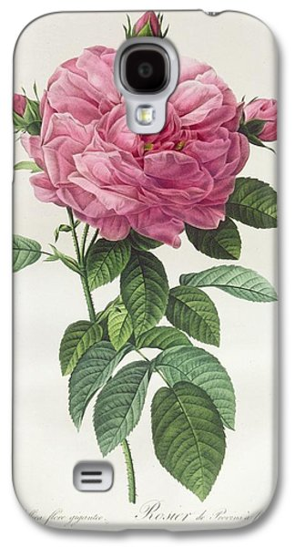 Nature Study Drawings Galaxy S4 Cases - Rosa Gallica Flore Giganteo Galaxy S4 Case by Pierre Joseph Redoute