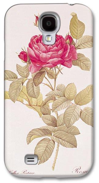 Rosa Gallica Pontiana Galaxy S4 Case by Pierre Joseph Redoute