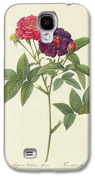 Rosa Gallica Purpurea Velutina Galaxy S4 Case